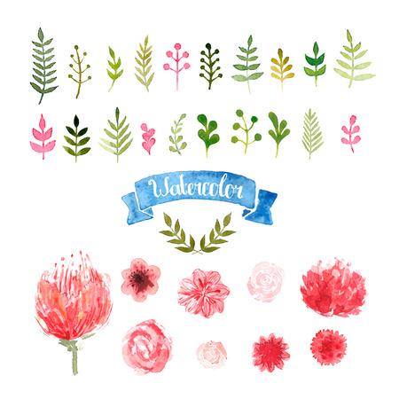 Fiori dell'acquerello, allori e foglie, vettore collezione floreale, rosa, Piones, colori rosa e rosso. Acquerello illustrazione floreale isolato su bianco