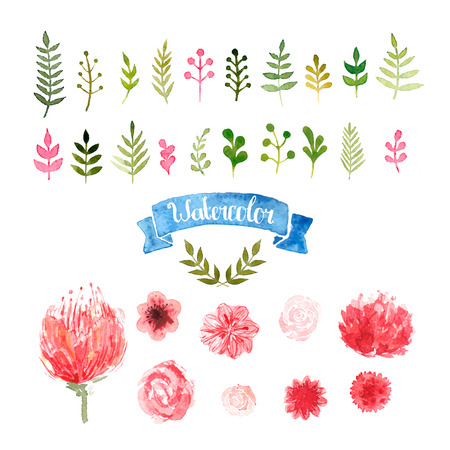 Watercolor flowers, laurels and leaves, vector floral collection, rose, piones, pink and red colors. Watercolor floral illustration isolated on white