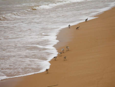 sea, sand, birds Stock Photo - 711449