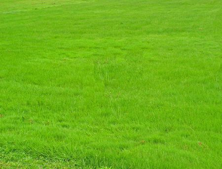 herbage: Green grass - texture       Stock Photo