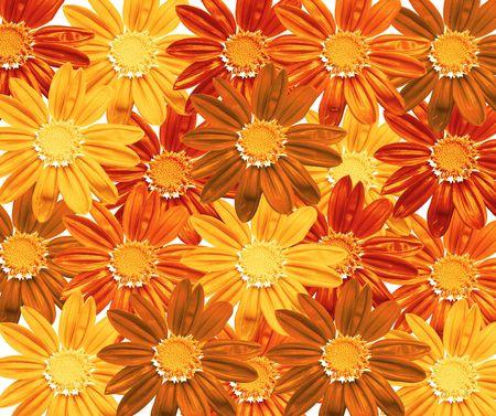 Flowers - texture