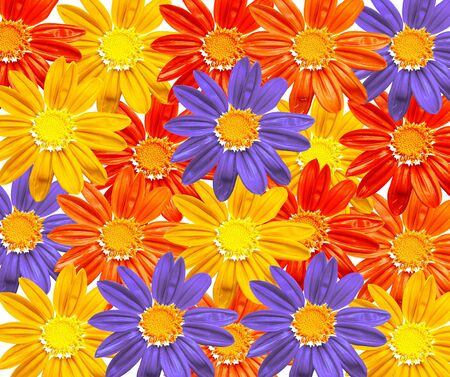 abloom: Flower field - texture, illustration