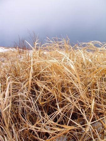 Autumnal grass Stock Photo - 936133