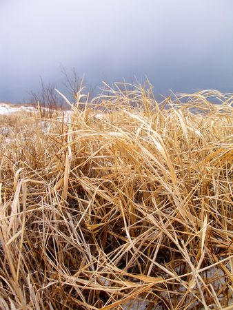 Autumnal grass    photo