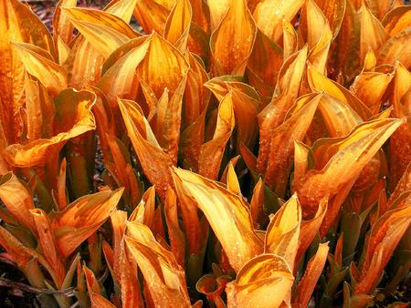 herbage: Natural background