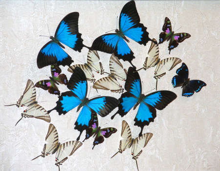 extreme close up: Blue butterflies - illustration