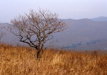 Prairie, autumnal scene photo