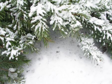 Snowbound branch of fir Stock Photo - 1683255