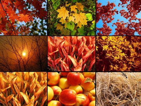 changing seasons: Autumnal collage