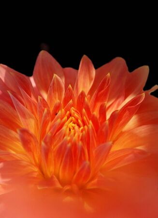 Fairy flower photo