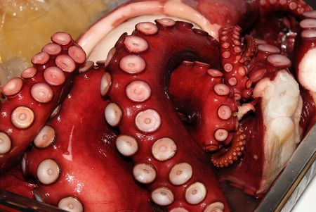 Octopus, seafood photo