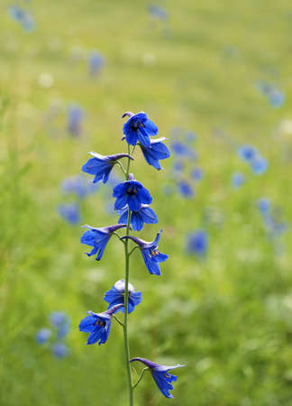 Harebell meadow photo