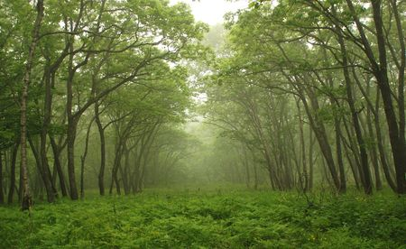 Forest mystic way, Primorye, Russia