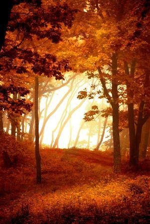 autumnal: Autumnal forest frame, natural window