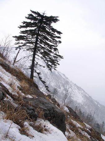 boreal: Boreal view, alone tree on hillside, Russia