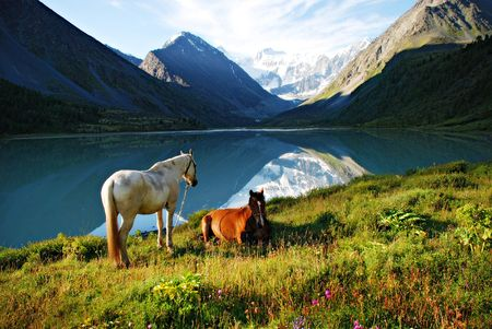 Mountain pasture, horses, lake Ak-kem, Altai, Russia Banque d'images