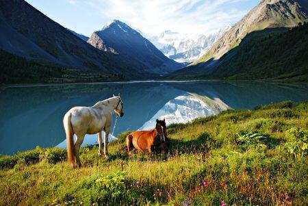 Los pastos de montaña, caballos, lago Ak-Kem, Altai, Rusia  Foto de archivo