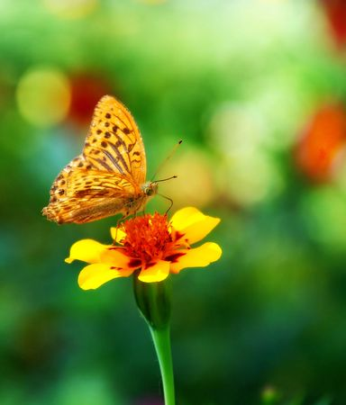 Butterfly - monarch Stock Photo