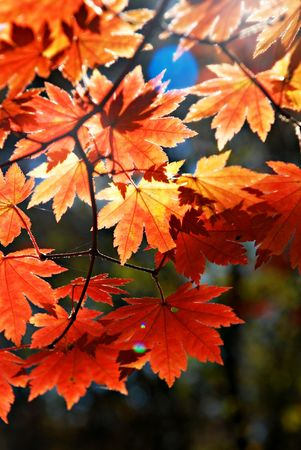Autumnal ornament Stock Photo - 3293624