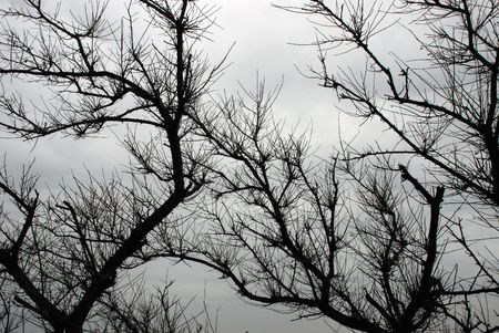 Branches and wind, design element Stock Photo - 3330307