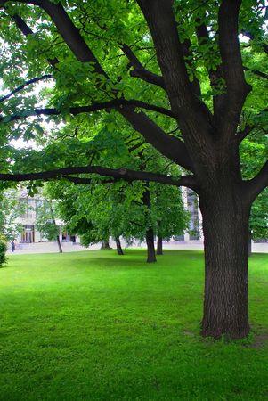 Big oak, park photo