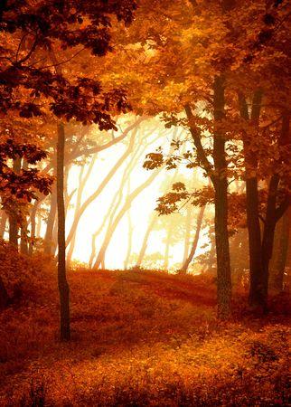 boles: Autumnal forest frame, natural window