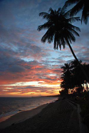 Tropical sunset, palms photo