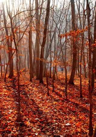 Autumnal forest photo