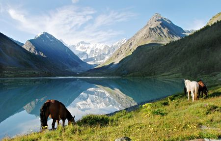 Horses near mountain lake Ak-kem, Altai, Russia photo