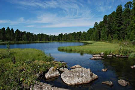 altai: Wild forest, river and Karacol lake, Altai, Russia