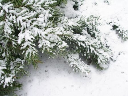 ramification: Winter background for text