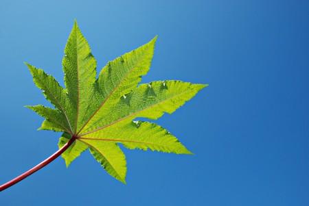 Green leaf against blue sky Stock Photo - 4303374