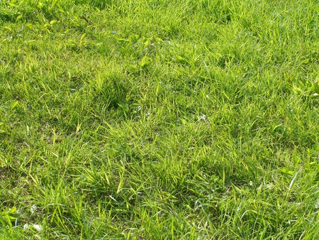 Green grass - texture, sunlit lawn, natural background         photo