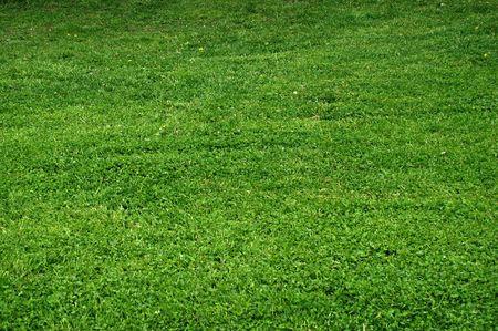 Green grass - texture photo