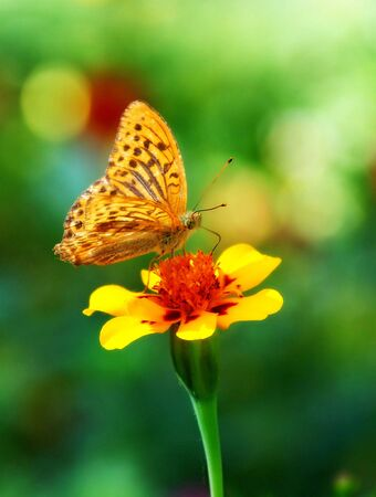 Butterfly - monarch Stock Photo - 4949116