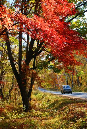Autumnal road Stock Photo - 4949117