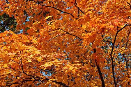 Autumnal foliage Stock Photo - 4951340