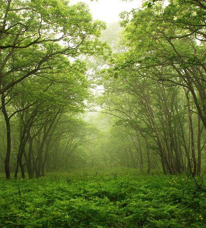 buche: Forest mystischen Weg, Primorye, Russland
