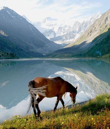 autumn horse: Horse near mountain lake Ak-kem Stock Photo