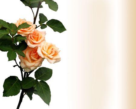 rose-bush: Rosebush, projektowanie elementów - powitanie karty