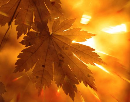 beautiful thanksgiving: Rainbow rays, yellow maple leaf Stock Photo