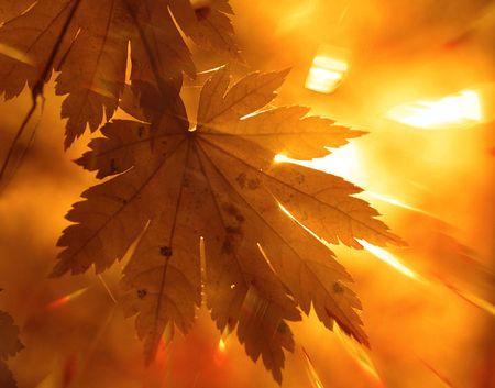 calendario noviembre: Rayos Rainbow, la hoja de arce amarillo