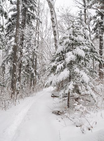 Snow path in winter forest photo
