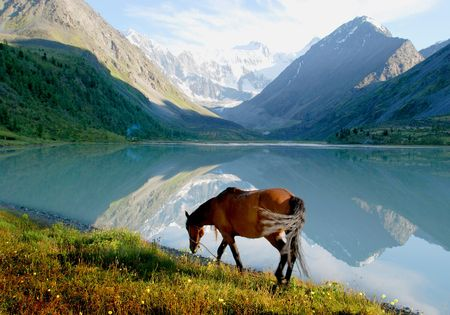 Horse near mountain lake Ak-kem, Altai, Russia, wild landscape photo