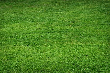 Green grass - texture Stock Photo - 6597427