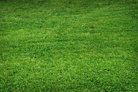 Green grass - texture