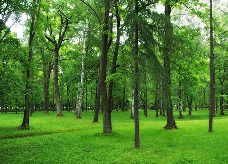 Green park, forest background photo