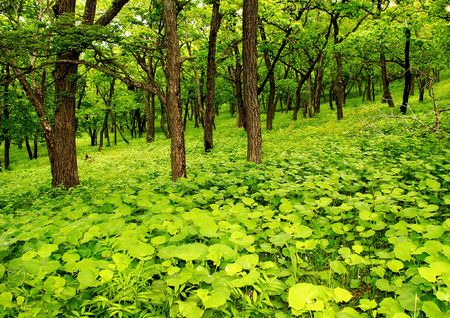 greenwood: Green forest, young foliage, summer scene Stock Photo