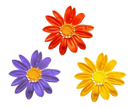 flowers  isolated on white,  red, yellow, blue camomiles Stock Photo
