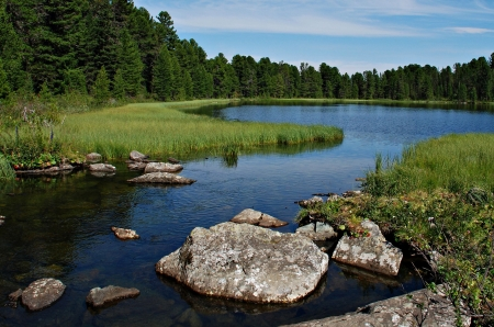 river stones: Wild forest, river and Karacol lake, Altai, Russia